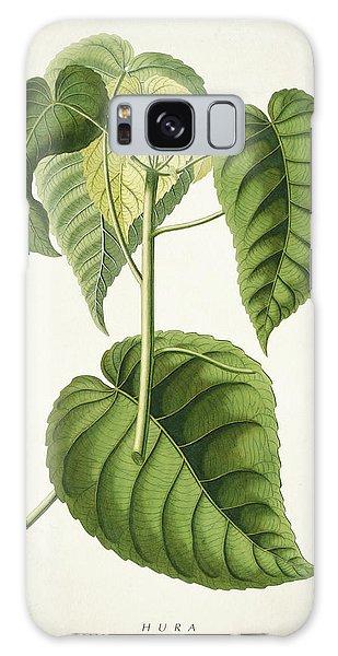 Botanical Garden Galaxy Case - Hura Botanical Print by Aged Pixel