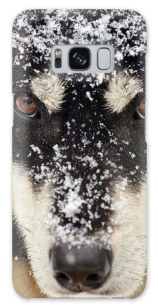 Husky And Snow Close-up Galaxy Case