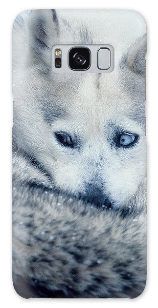 Husky Curled Up Galaxy Case
