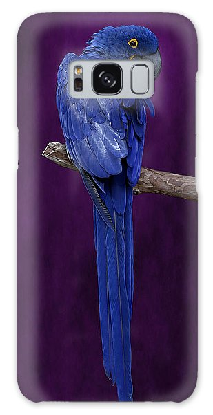 Hyacinth Macaw Panoramic Galaxy Case