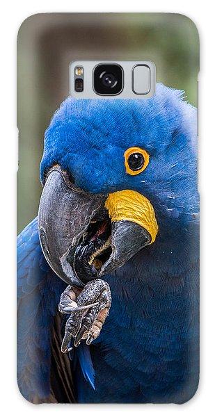 Hyacinth Macaw Galaxy Case
