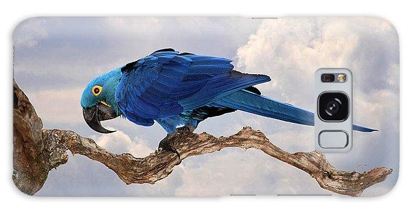 Hyacinth Macaw Galaxy Case by Wade Aiken