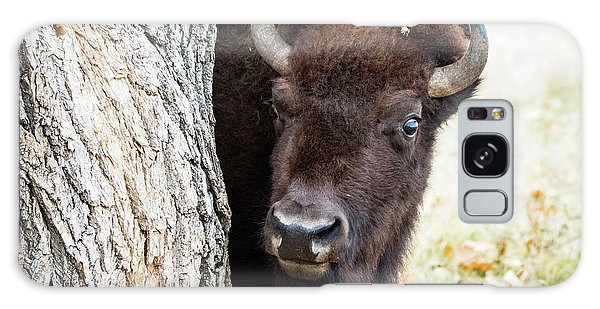 American Bison Peeks Around Tree Galaxy Case