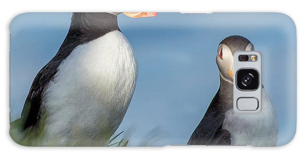 Puffin Galaxy S8 Case - Iceland Puffins  by Betsy Knapp