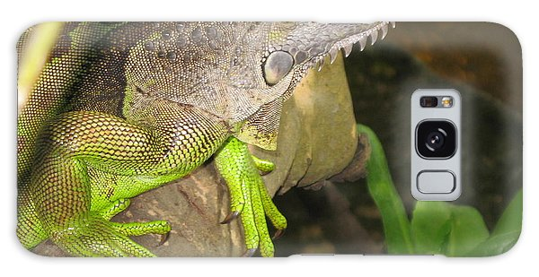 Iguana - A Special Garden Guest Galaxy Case by Christiane Schulze Art And Photography
