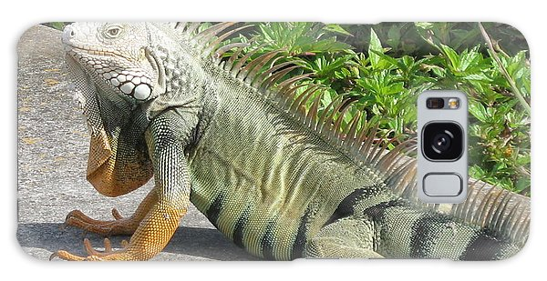 Iguania Sunbathing Galaxy Case by Christiane Schulze Art And Photography
