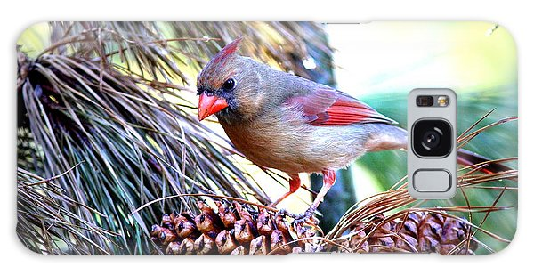Img_0311 - Northern Cardinal Galaxy Case