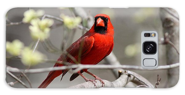Img_2027-004 - Northern Cardinal Galaxy Case