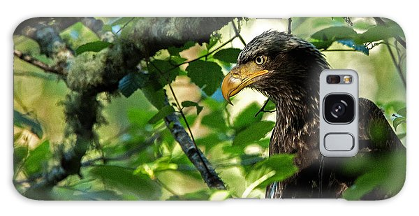 Juvenile Bald Eagle Galaxy Case