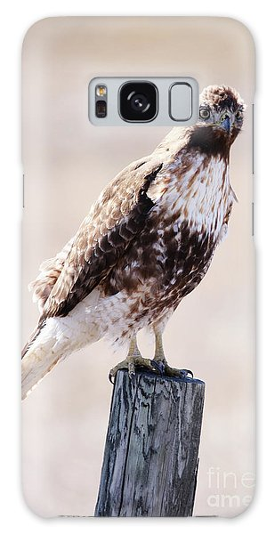 Immature Red Tailed Hawk Galaxy Case