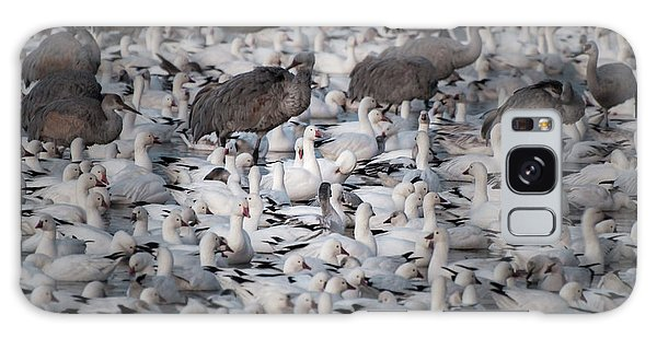 Galaxy Case featuring the photograph In A Crowd - The Bosque by Britt Runyon