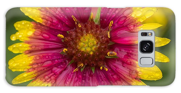 Indian Blanket Galaxy Case