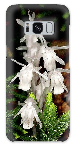 Indian Pipes On Club Moss Galaxy Case