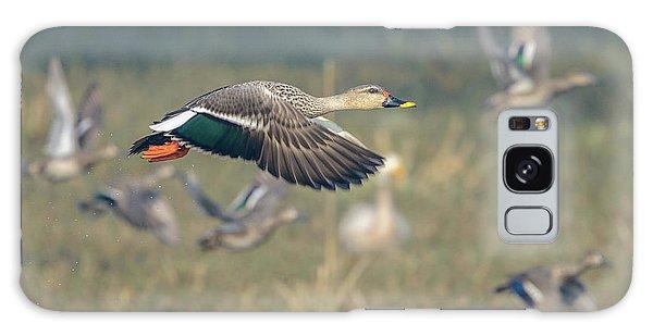 Indian Spot-billed Duck 01 Galaxy Case