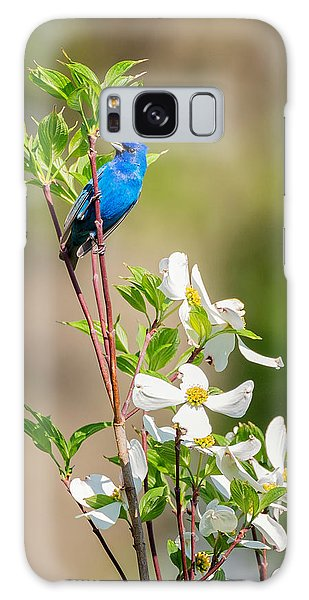 Indigo Bunting In Flowering Dogwood Galaxy Case