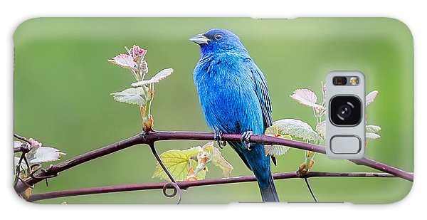 Indigo Bunting Perched Galaxy Case