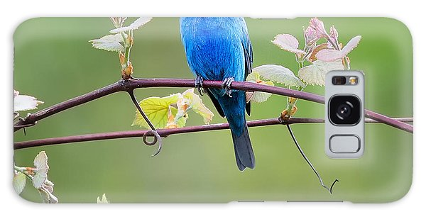 Indigo Bunting Perched Square Galaxy Case