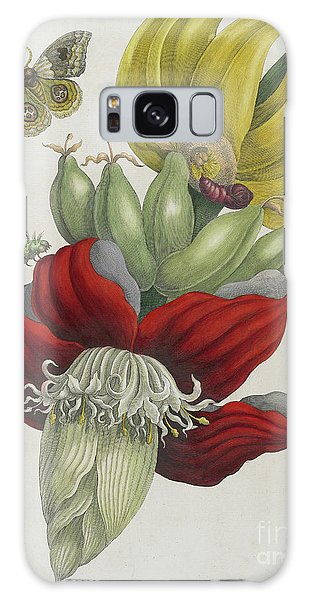 Inflorescence Of Banana, 1705 Galaxy Case by Maria Sibylla Graff Merian