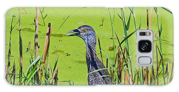 Inmature Black Crowned Heron. Galaxy Case
