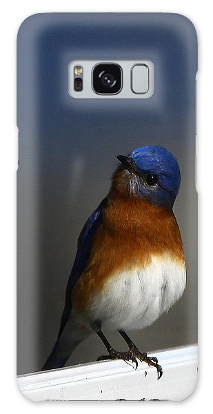 Inquisitive Bluebird Galaxy Case