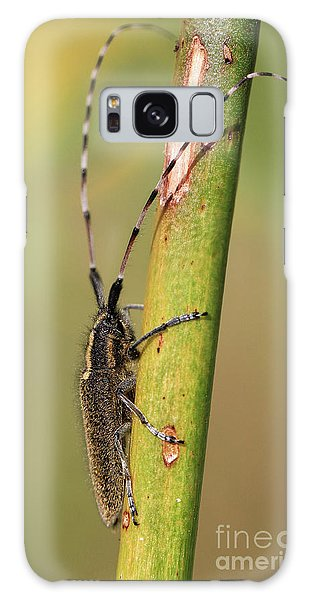 Insect On A Branch Galaxy Case by Stephan Grixti