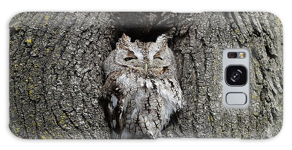 Invincible Screech Owl Galaxy Case