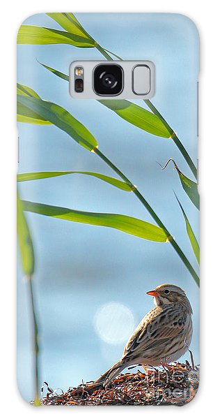 Ipswich Sparrow Galaxy Case