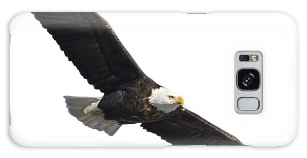 Isolated American Bald Eagle 2016-2 Galaxy Case