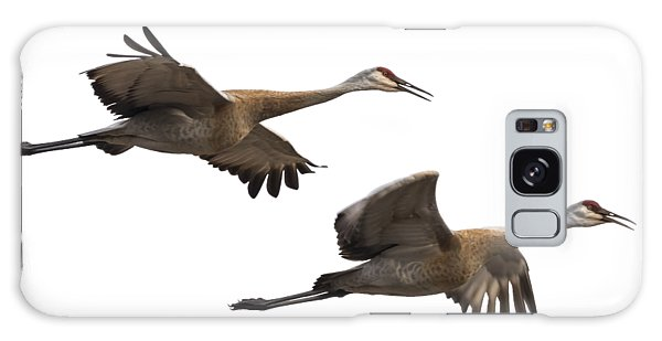 Isolated Sandhill Cranes 2016-1 Galaxy Case