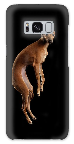 Dog Galaxy S8 Case - Italian Greyhound Dog Jumping, Hangs In Air, Looking Camera Isolated by Sergey Taran
