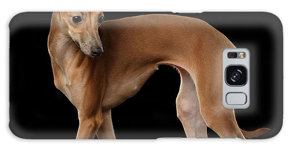 Italian Greyhound Dog Standing  Isolated Galaxy Case by Sergey Taran