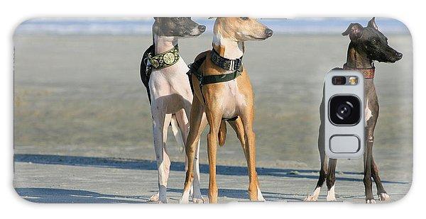 Italian Greyhounds On The Beach Galaxy Case