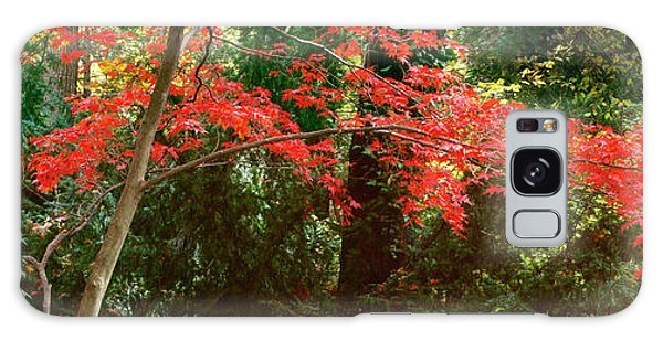 Japanese Maple Galaxy Case by John Pagliuca