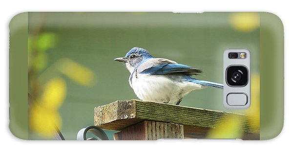 Scrub Jay On A Fence - Images From The Fall Garden Galaxy Case