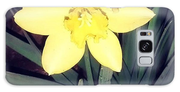 Jonquil At Night. #daffodil Galaxy Case
