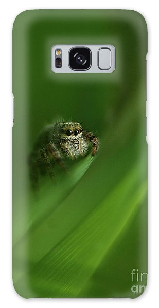 Jumping Spider Contemplating Life Galaxy Case