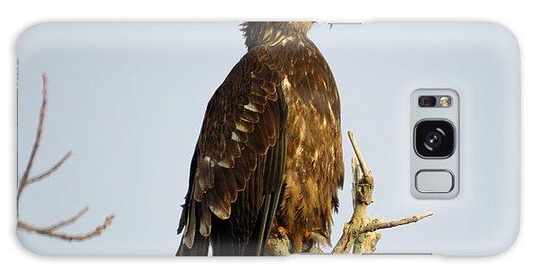 Juvenile Bald Eagle 1 Galaxy Case