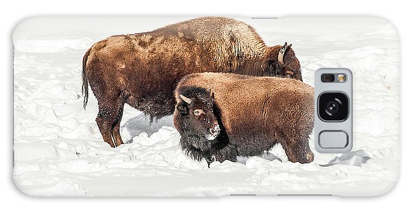 Juvenile Bison With Adult Bison Galaxy Case