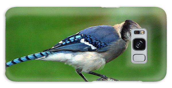 Juvenile Blue Jay  Galaxy Case