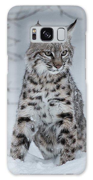 Juvenile Bobcat In The Snow Galaxy Case