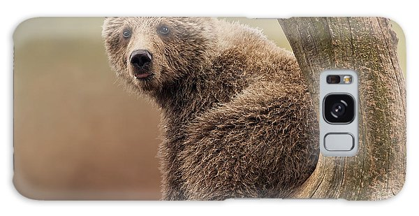 Juvenile Brown Bear - 365-5 Galaxy Case