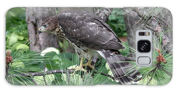 Juvenile Cooper's Hawk Galaxy Case