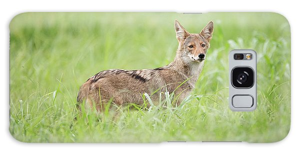 Juvenile Coyote Galaxy Case