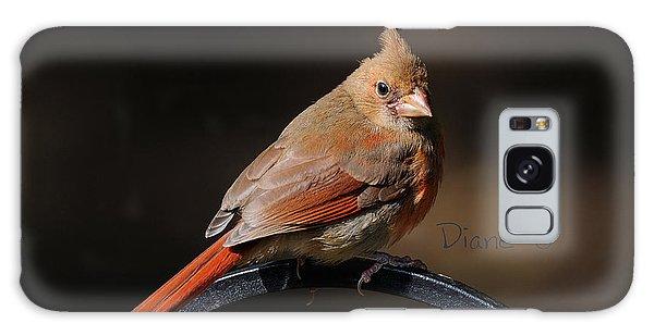 Juvenile Male Cardinal Galaxy Case