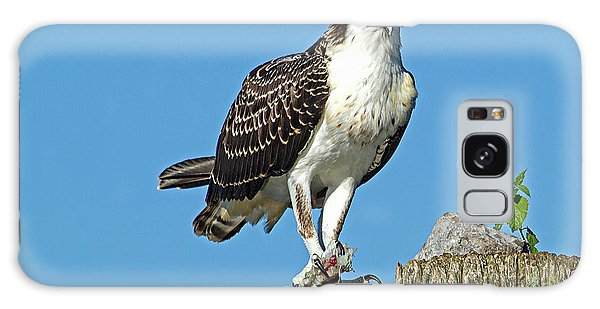 Juvenile Osprey#1 Galaxy Case