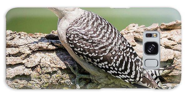 Juvenile Red-bellied Woodpecker Galaxy Case