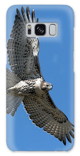 Juvenile Red-tailed Hawk At Riverside Cemetery Galaxy Case by Stephen  Johnson