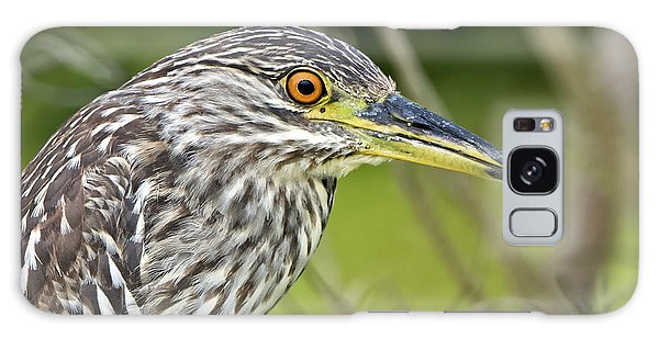 Juvi Black-crowned Night Heron Galaxy Case