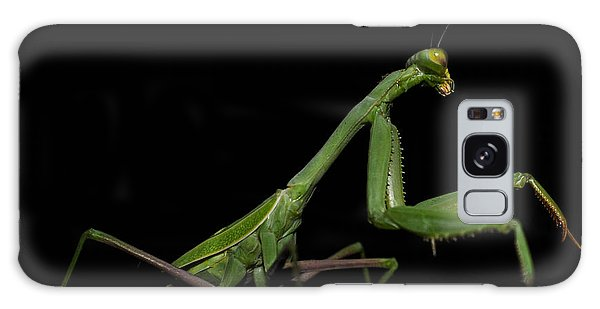 Katydid In Black Galaxy Case