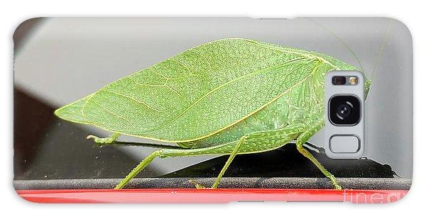 Katydids- Bush Crickets Galaxy Case